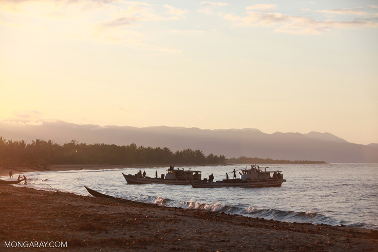Rosewood trafficking boats in Maroantsetra, Madagascar, in 2012. Photo by Rhett A. Butler for Mongabay.