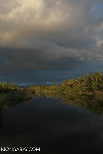 Palms along a canal near Maroantsetra [madagascar_2269]