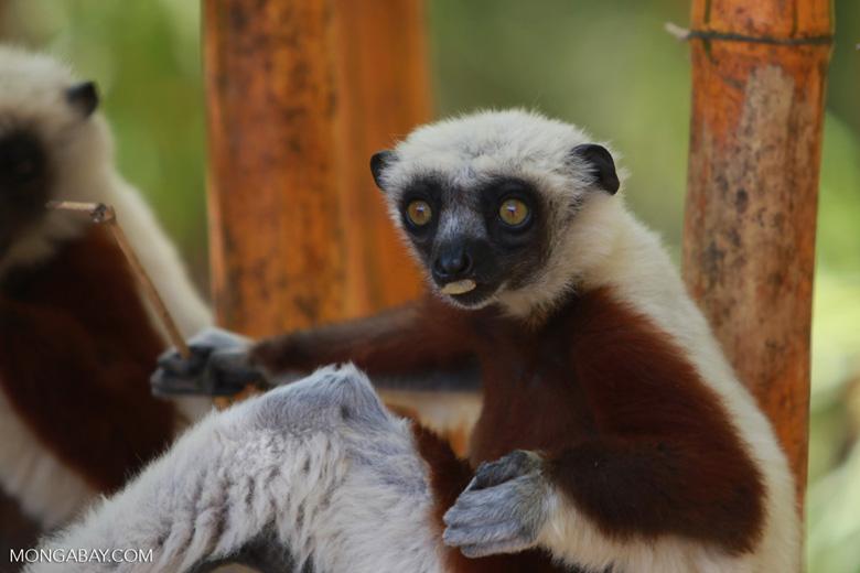 Madagascar 2421