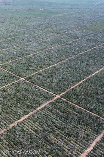 Aerial view of sisal plantation near Amboasary