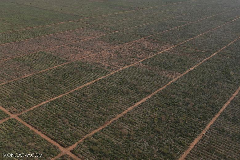 Aerial view of sisal plantation near Amboasary [madagascar_2989]