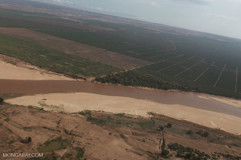 Aerial view of the Mandrare River, gallery forest of Berenty, and sisal [madagascar_2997]