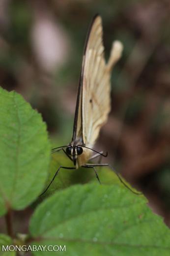 Butterfly [madagascar_3575]