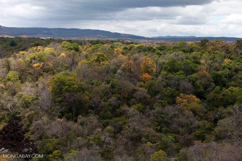 Deciduous forest of Ankarana [madagascar_3922]