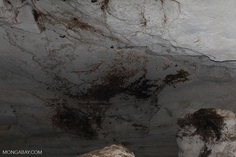 Bat cave in Ankarana [madagascar_3982]