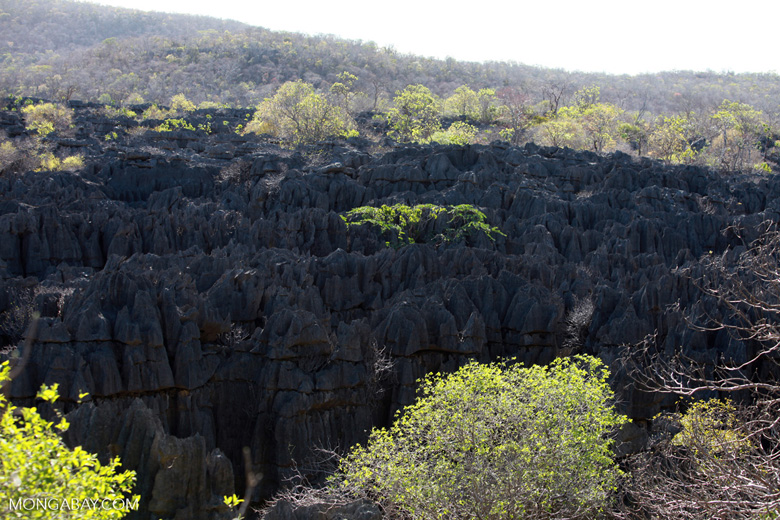Limestone tsingy [madagascar_4131]