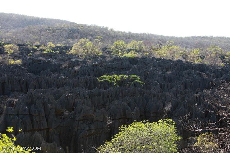 Limestone tsingy (stone forest)