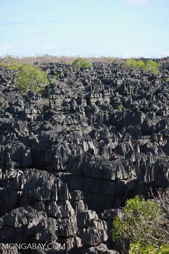 Limestone tsingy [madagascar_4141]
