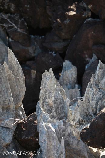 Limestone tsingy [madagascar_4144]