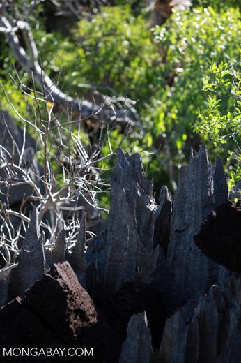 Limestone tsingy [madagascar_4148]