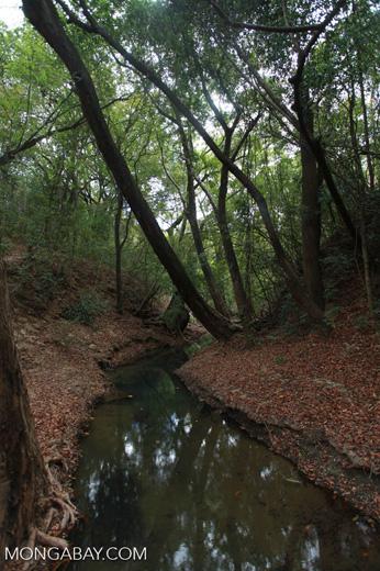 Creek in Ankarana [madagascar_4269]