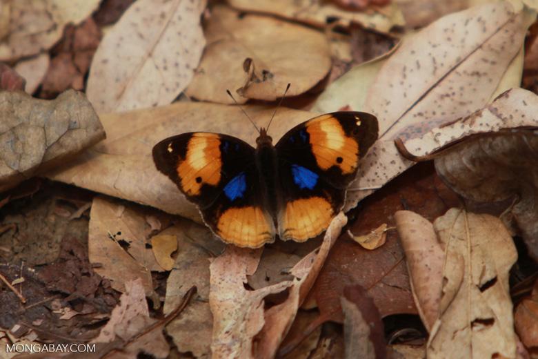 Butterfly [madagascar_4282]