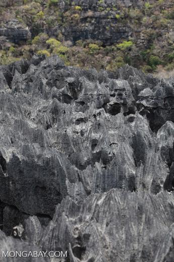 Sharp limestone tsingy [madagascar_4402]