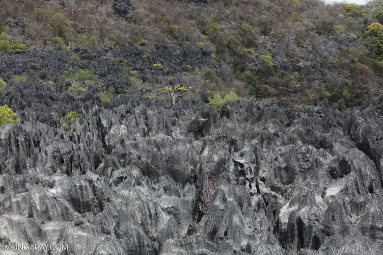 Tsingy [madagascar_4404]