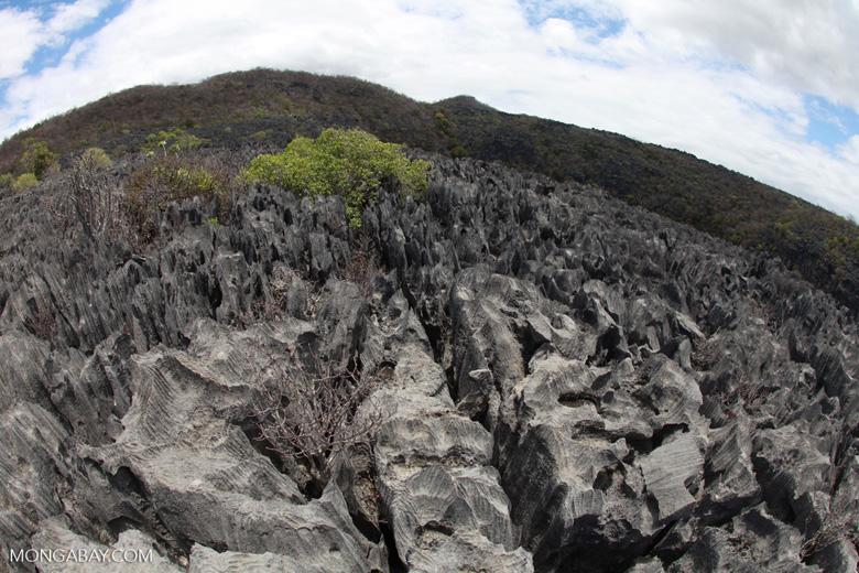 Fisheye view of the tsingy