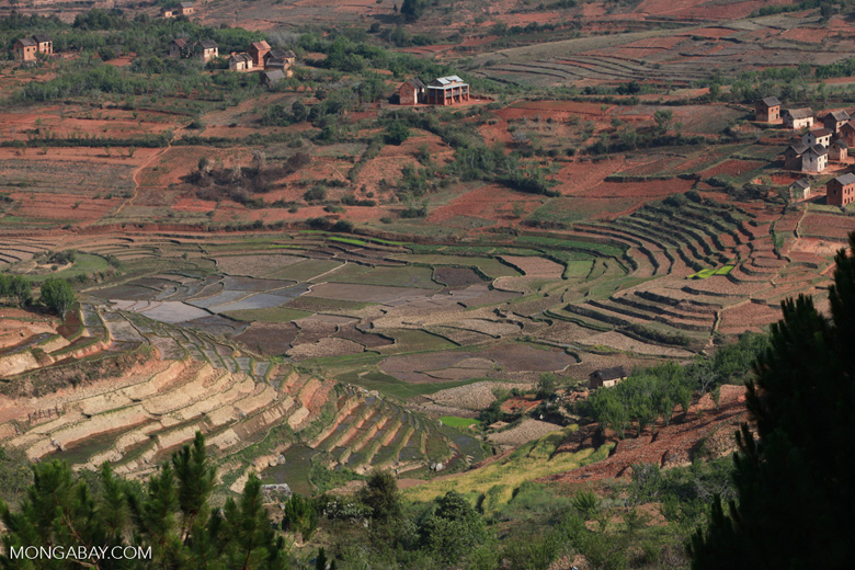 Terraced rice paddies Madagascar's Haus Plateaux
