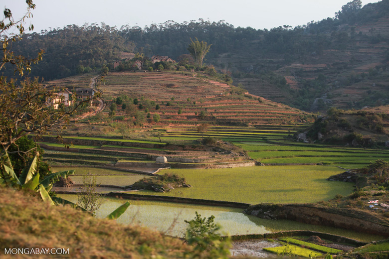 Village amid terraced rice fields in Madagascar's Central Plateau [madagascar_4808]