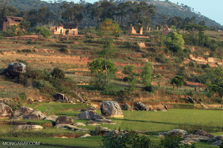 Boulders and rice fields