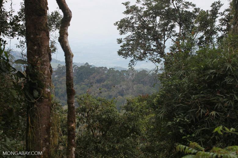 Ranomafana rainforest seen from a lookout on the Valohoaka or Vatoharanana trail [madagascar_5396]