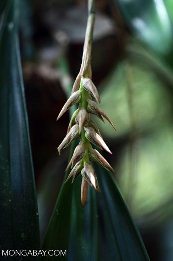 Plant [madagascar_5421]