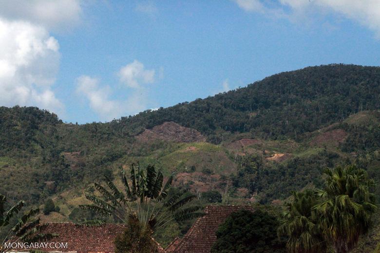 Deforestation near Ranomafana [madagascar_5545]