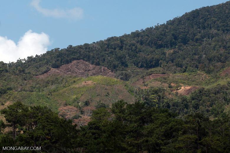 Deforestation near Ranomafana [madagascar_5566]