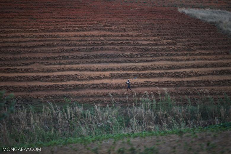 Dry terraced rice paddies