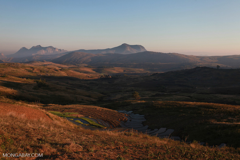 Antanifotsy Valley at sunrise