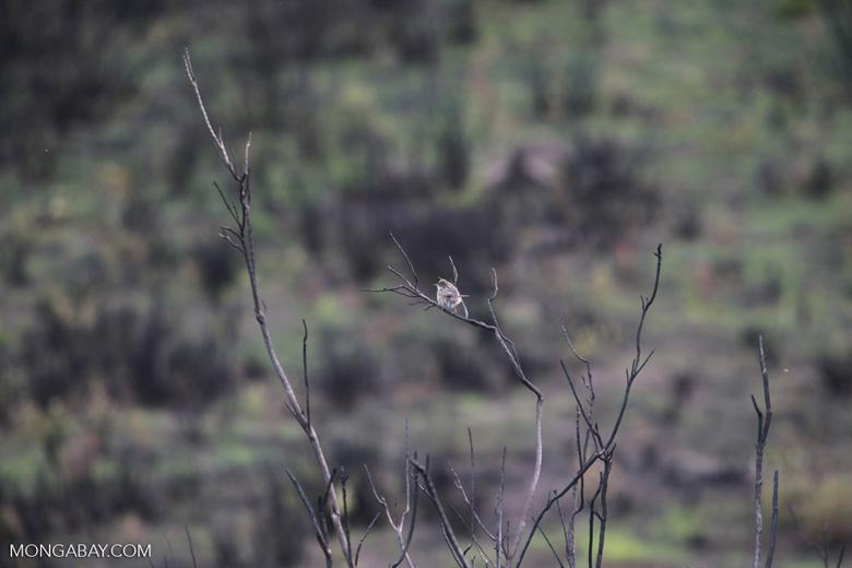 bird [madagascar_6365]