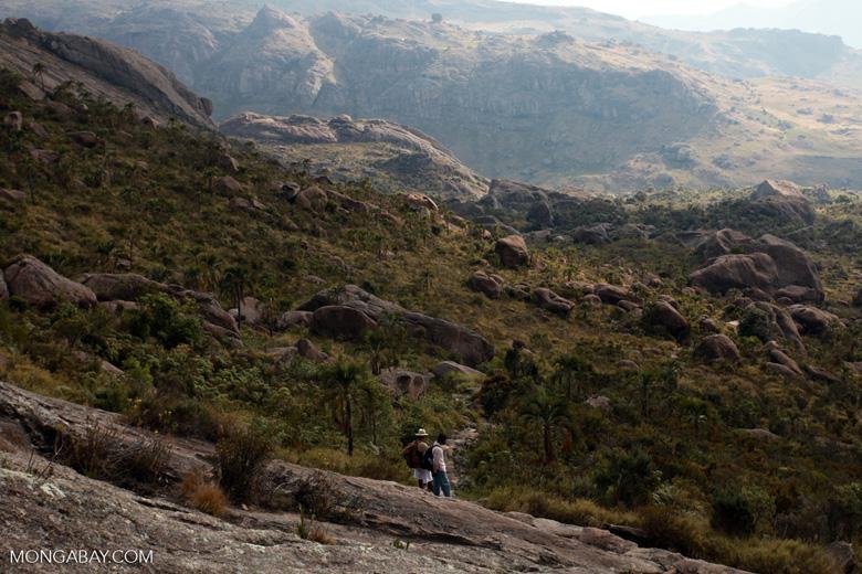 Andringitra landscape: boulders and palms [madagascar_6641]