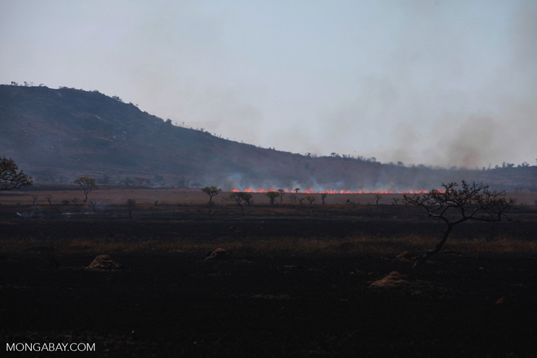 Fire creeping across the savanna in Madagascar