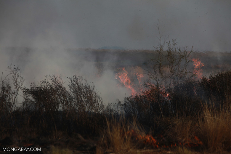 Photographer getting a close-up photo of a brush fire in Madagascar