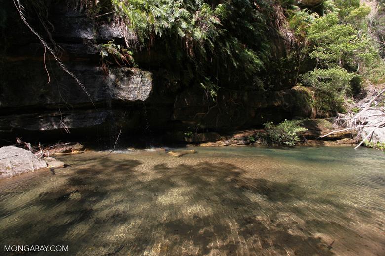 Ranohira King's pool [madagascar_7200]