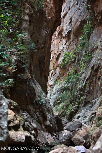 Canyon des singes [madagascar_7242]