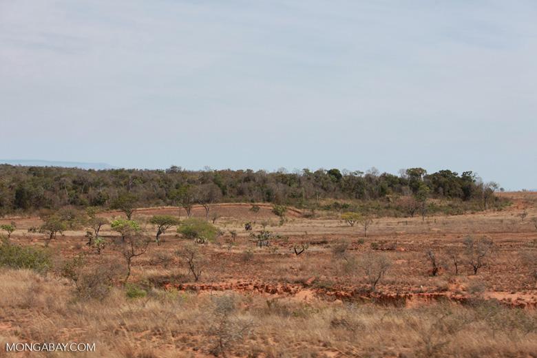 Zombitse-Vohibasia dry forest
