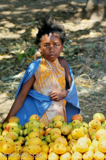 Girl selling mangos alongside a road [madagascar_ankarafantsika_0385]