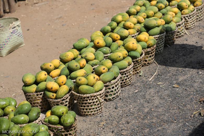 Mangos for sale along a road in Madagascar [madagascar_ankarafantsika_0388]