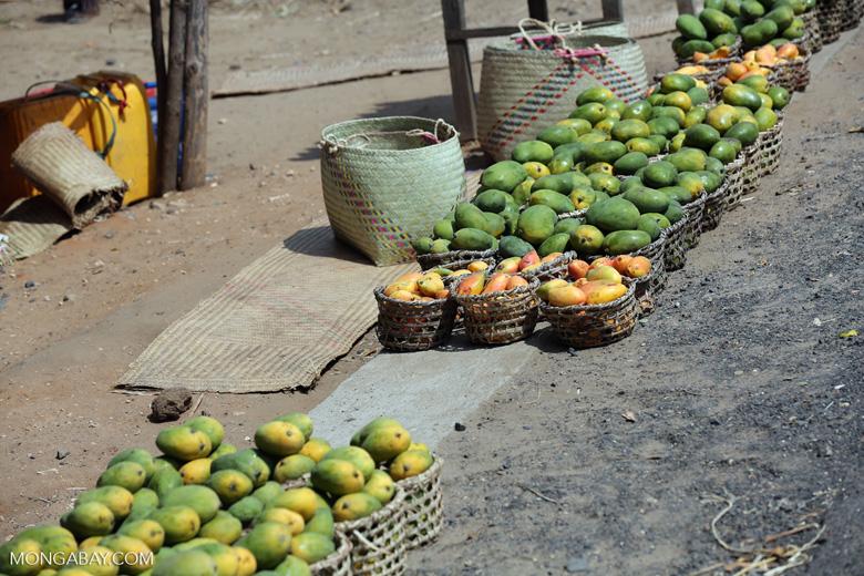 Mangos for sale along a road in Madagascar [madagascar_ankarafantsika_0389]