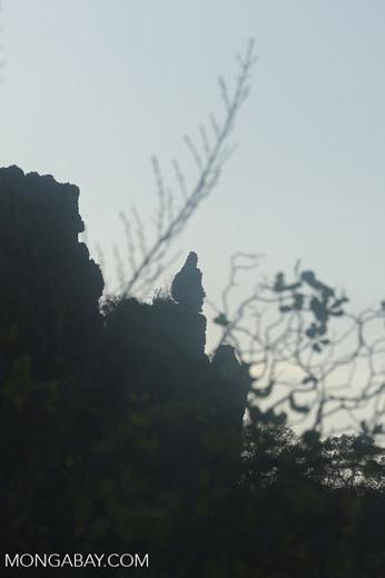 Buddha-like karst formation in Madagascar