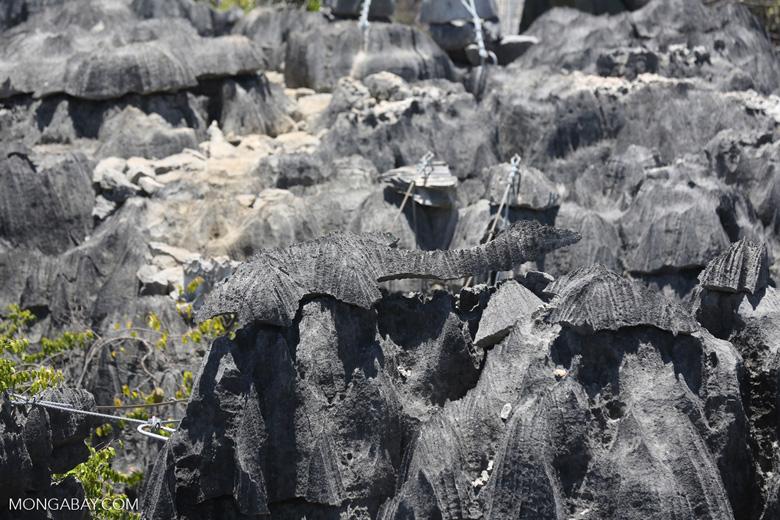 Dinosaur-shaped tsingy in Ankarana