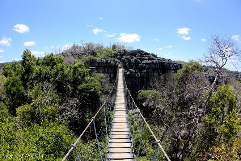 Tsingy bridge [madagascar_ankarana_0341]