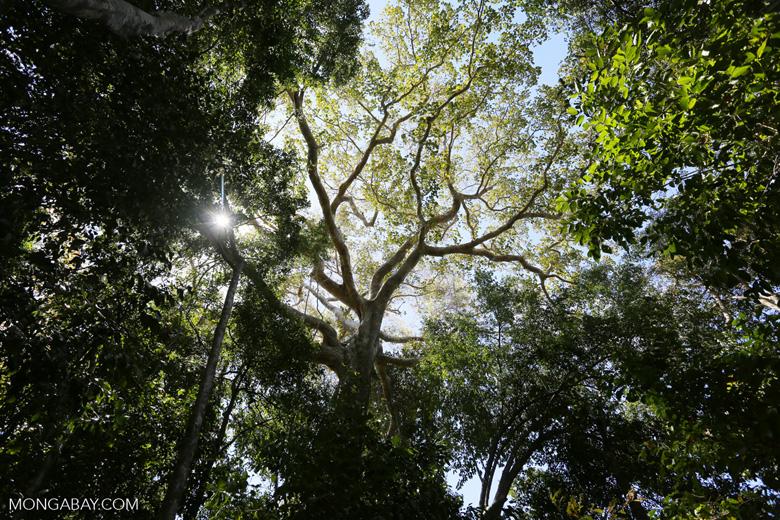 Madagascar dry forest [madagascar_ankarana_0422]