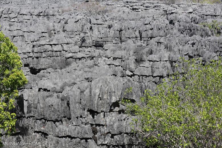 Tsingy in Madagascar [madagascar_ankarana_0426]