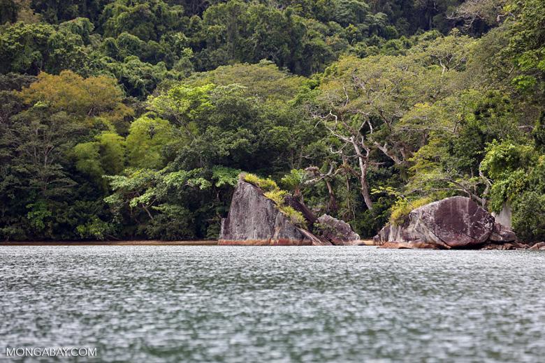 Rainforest on Nosy Mangabe [madagascar_maroantsetra_0022]