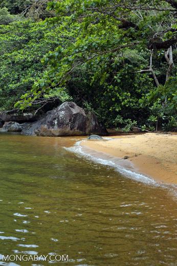 Beach on Nosy Mangabe [madagascar_maroantsetra_0033]
