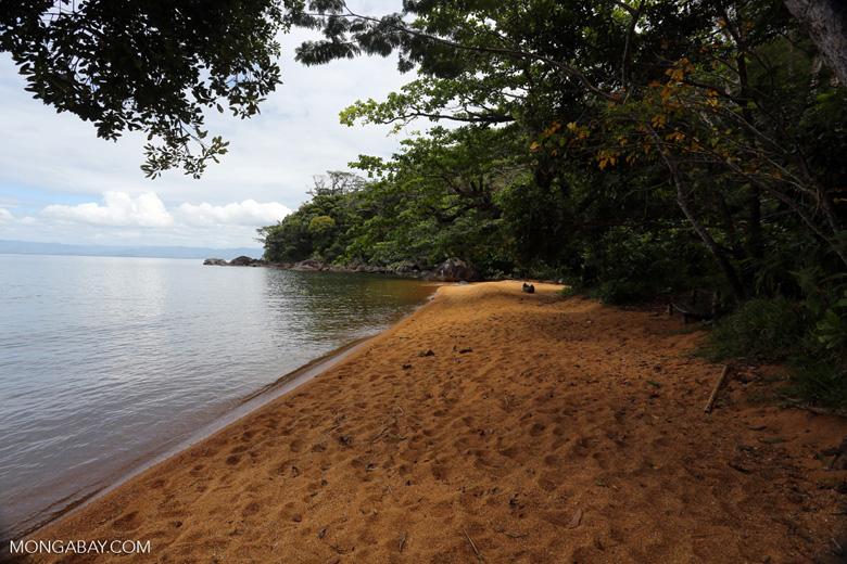 Beach on Nosy Mangabe [madagascar_maroantsetra_0038]