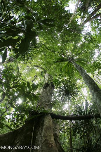 Nosy Mangabe rainforest [madagascar_maroantsetra_0113]