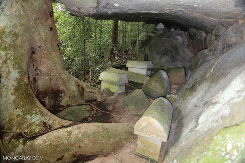 Coffins on Nosy Mangabe [madagascar_maroantsetra_0156]