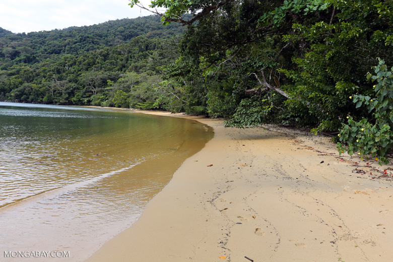 Nosy Mangabe beach [madagascar_maroantsetra_0206]