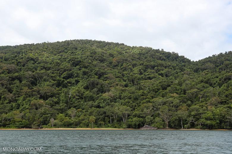Rainforest on Nosy Mangabe [madagascar_maroantsetra_0221]